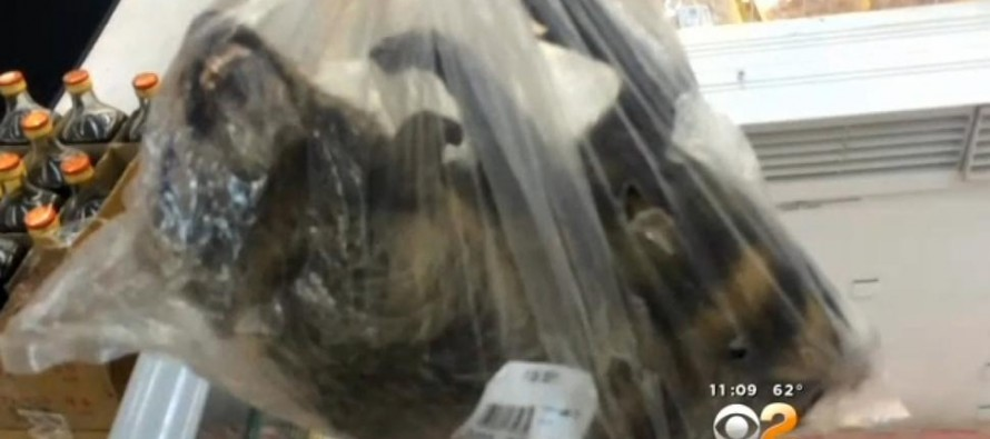 After A California Supermarket is Caught Selling Raccoons As Food, Health Officials Crack Down