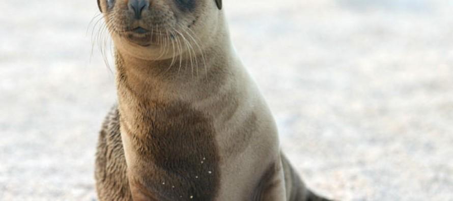 VIDEO: Badass sea lion joins family kayaking day