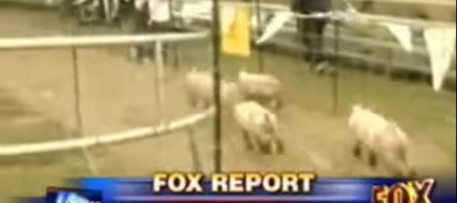 VIDEO: Check Out what HILARIOUS thing a Pig Farmer Did When His New Muslim Neighbors Asked HIM to Move