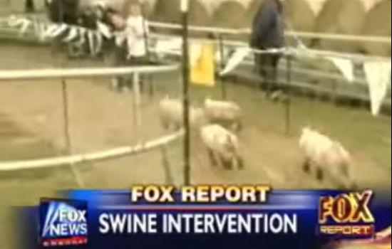 swine intervention