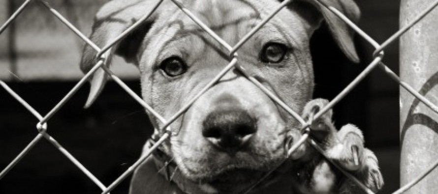 PETA's Dirty Little Secret: Shelter Puts Down 80% of All Animals in its Care
