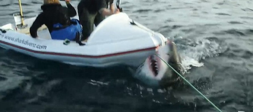 VIDEO: Watch a Great White Shark Attack A Film Crew In a Tiny Boat