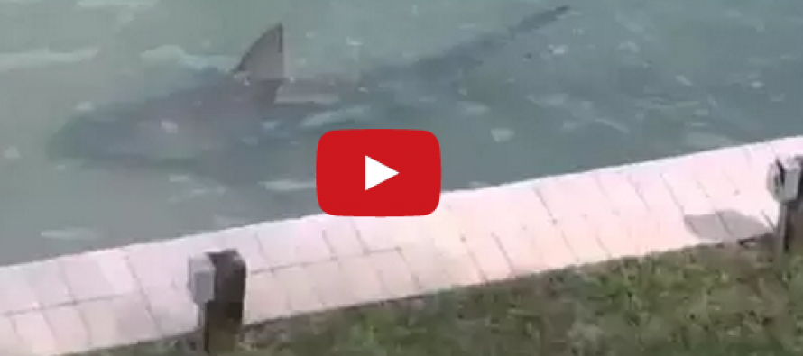 [VIDEO]  Do not go into the water!  Giant creature lurks in Florida backyard