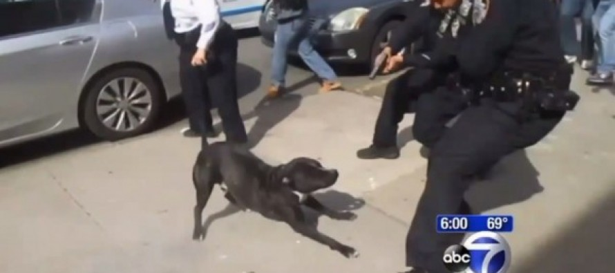 VIDEO: Police Recklessly Shoot At Dog In Crowd Of People During Arrest