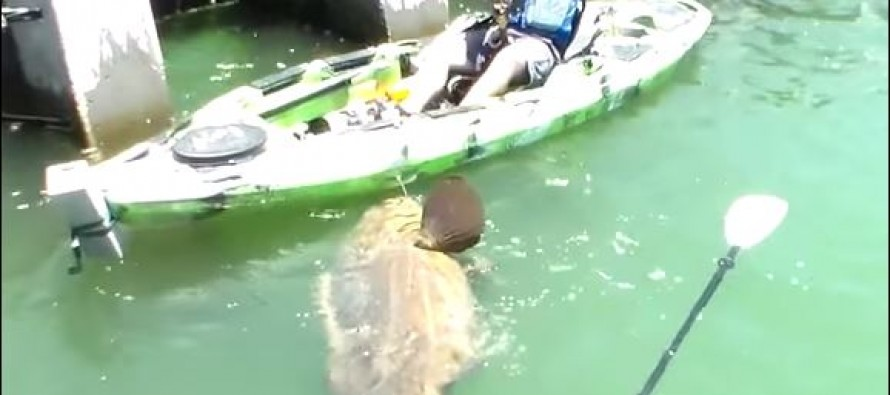 Fisherman Catches 552-Pound Massive Grouper, Breaks Rod and Goes Crazy