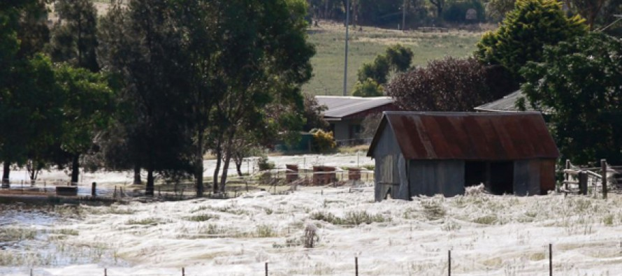 HORRIFYING: Thousands of Baby Spiders Reportedly Rain Down and Cover ENTIRE Town