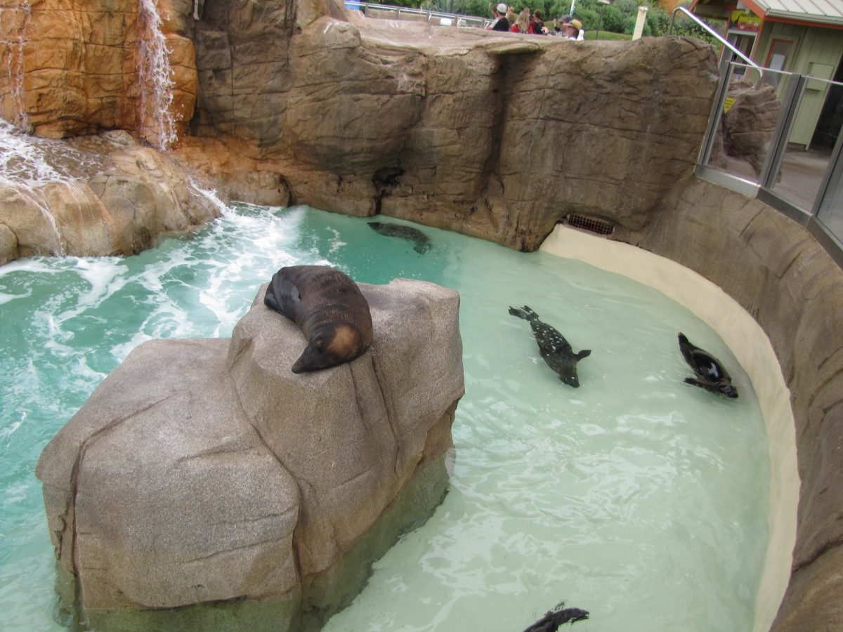 Sea Lions enjoy the area they live in and enchant guests