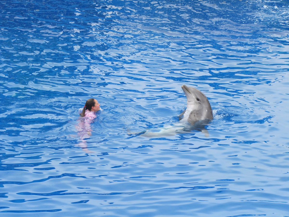 A trainer and her dolphin in the water