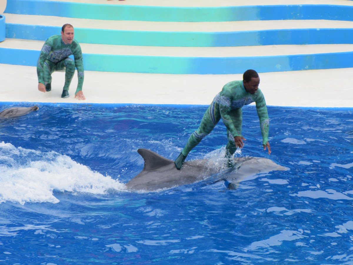 A trainer rides a dolphin