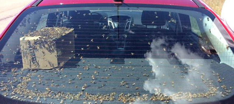 Police ticket driver swerving all over the road…with thousands of honey bees loose inside his car