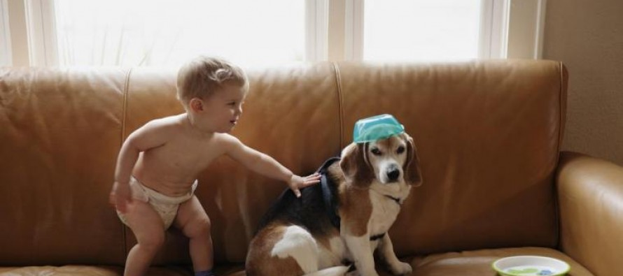 3-year-old boy receives letter from doggy heaven