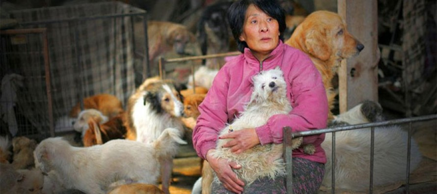 Woman Pays $1,000 to Save 100 Dogs at a Meat Market From Being Slaughtered
