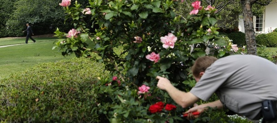 Obama Admin: You Can File A Complaint Against Your Boss If You're Injured Buying Flowers