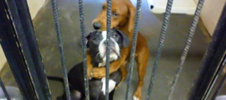 This Sweet Photo Saves Two Dogs From Being Put Down