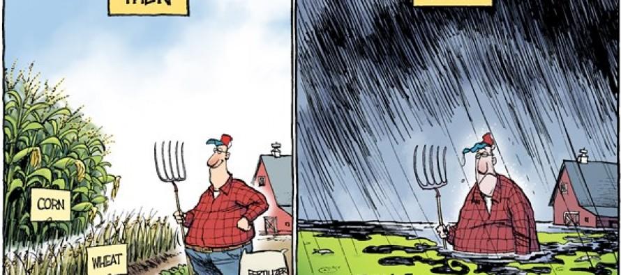 LOCAL OH – Bumper Crops (Cartoon)