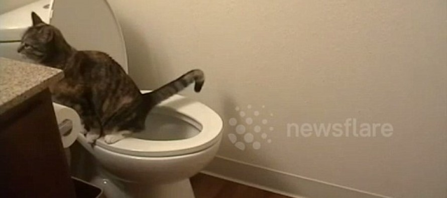Video: Whoever Thought You Could Toilet-Train a Cat?
