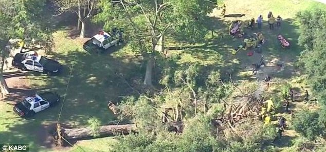 A 75-foot-tall tree fell in Southern California near a children's museum as a camp was wrapping up for the day.