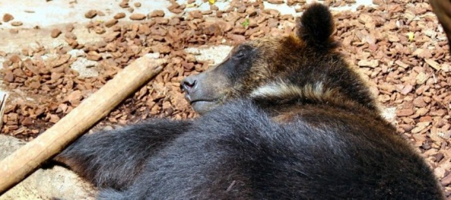 A Man Thought He Was Raising Puppies. They Were Bears