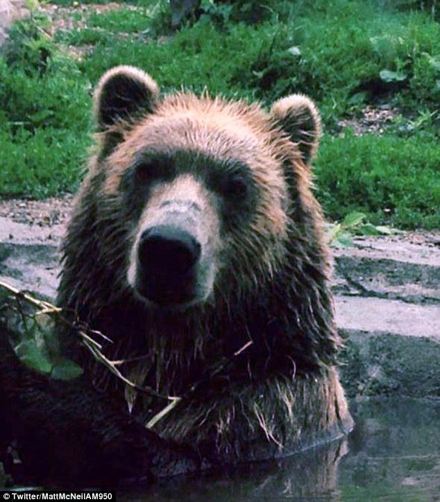 badbear