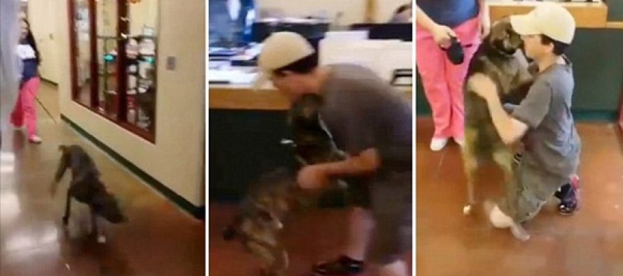 VIDEO: Touching moment an owner is reunited with the dog he was forced to give him up a year ago