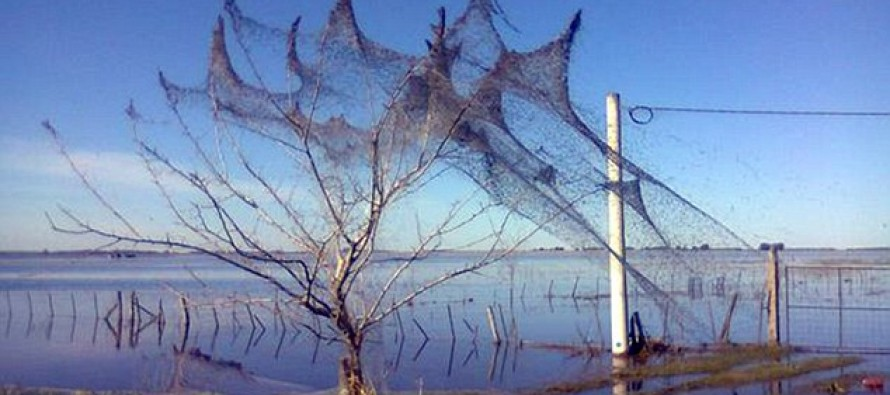 Argentinian Village Covered in 'Slime of the Devil' After Spider Invasion