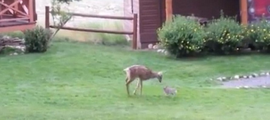 Watch this adorable real-life Bambi and Thumper play together