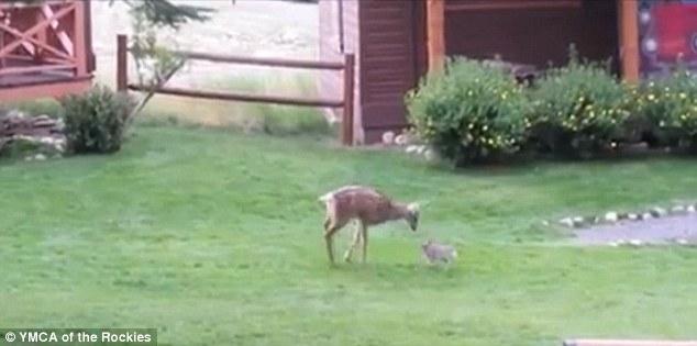 Bambi Thumper