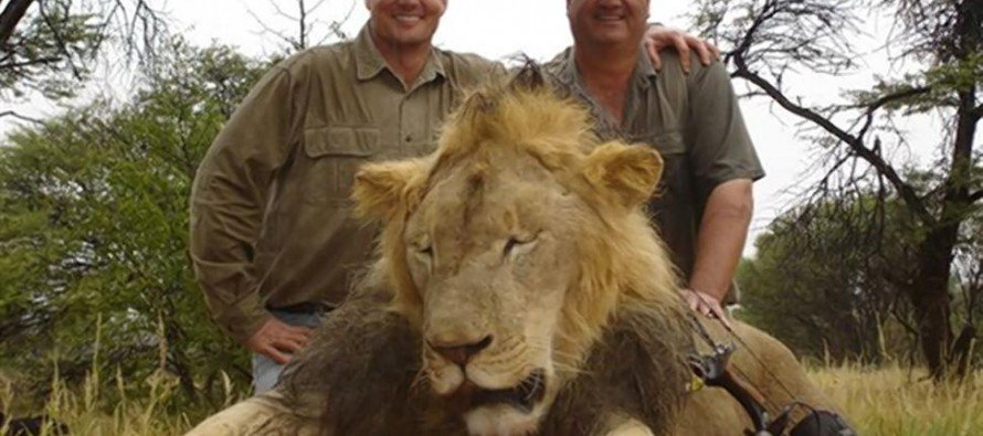 """Would You Wear This """"Cecil the Lion's Murder"""" Costume for Halloween?"""