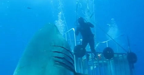 Video of a real monster: This is the biggest great white shark ever filmed