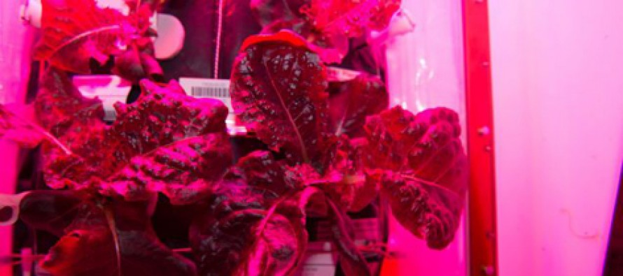 VIDEO: Space veggies are on the menu for the first time at the International Space Station