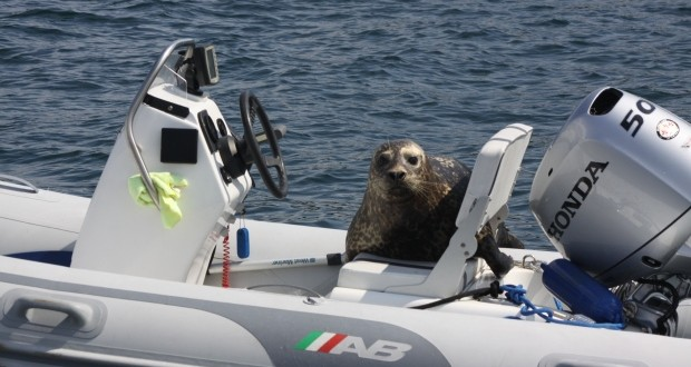 Seal-jumps-on-boat