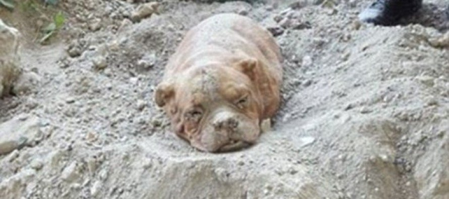Sadistic Owner Arrested After Dog Is Found Buried Alive Up To Its Head By Its Lead