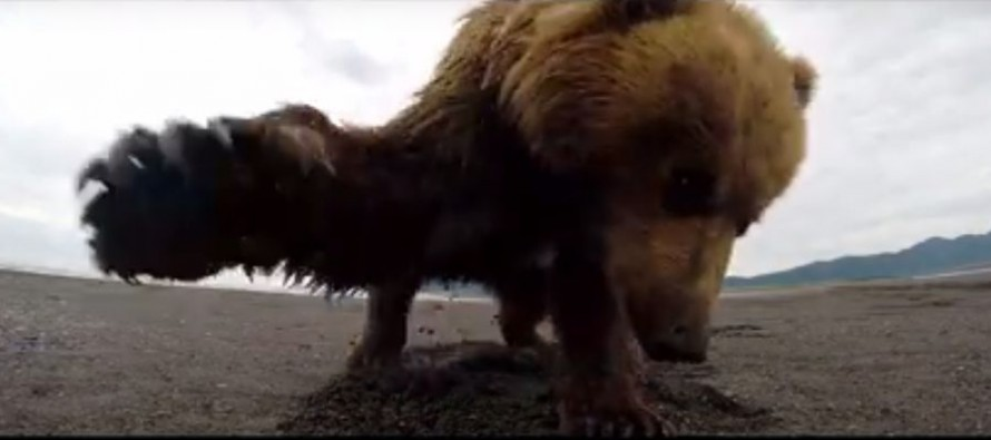 VIDEO: This is What It's Like to Get Slapped by a Bear