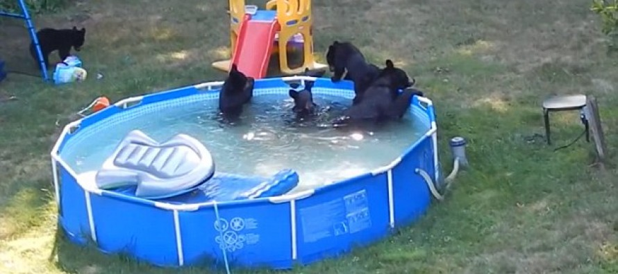 Video: Stunned kids watch family of bears cool off in their paddling pool & destroy their toys