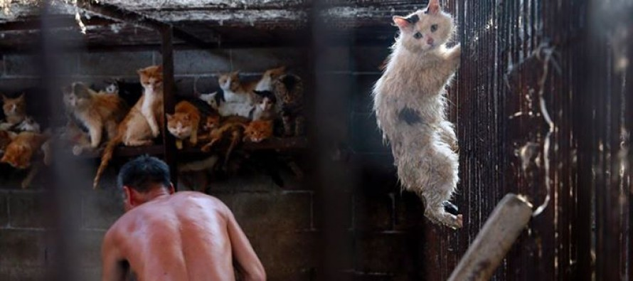 Cat photographed in desperate bid to escape Chinese butcher before being saved by Americans