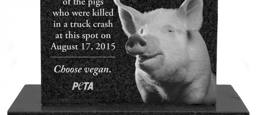 PETA Wants Pennsylvania to Erect a Grave Marker Where Pigs Died in Highway Crash