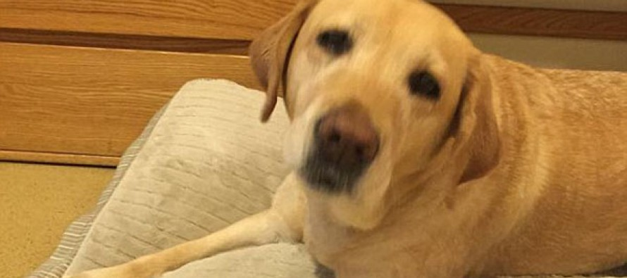 Philadelphia service dog dials 911 and saves owner's life by pulling her from house