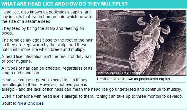Lice2