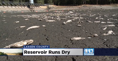 Calif. Residents Perplexed After Lake Mysteriously Goes Dry Overnight Leaving Thousands of Fish Dead