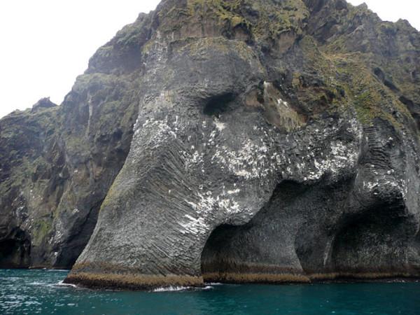 Sea Elephant2