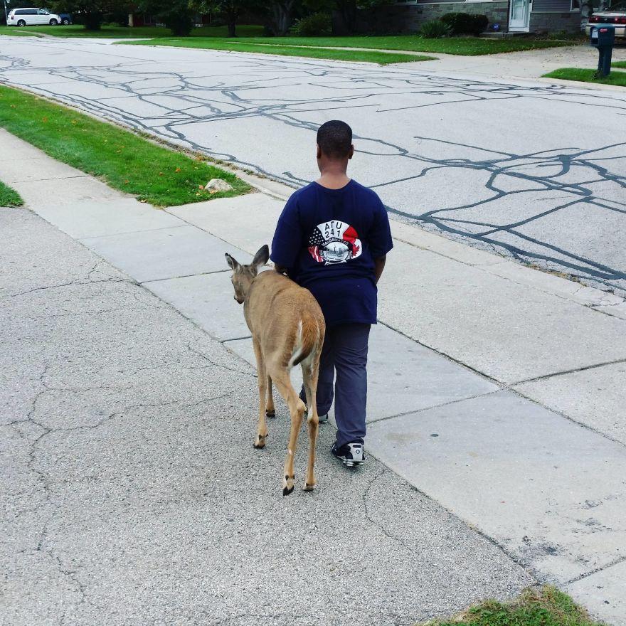 boy-deer