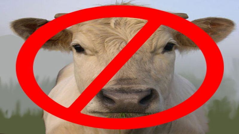 cow_face_375no