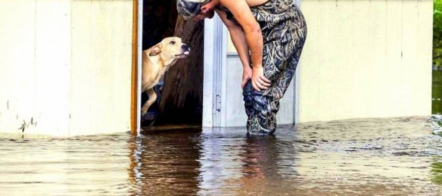 Man Saves & Adopts Dog Gutlessly Abandoned During Flood
