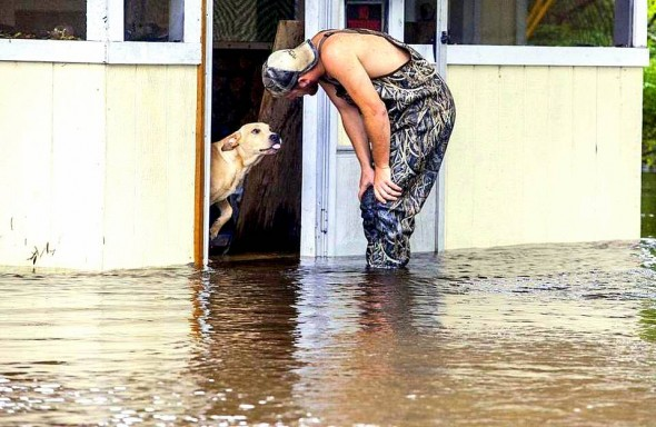 dog rescued during flood