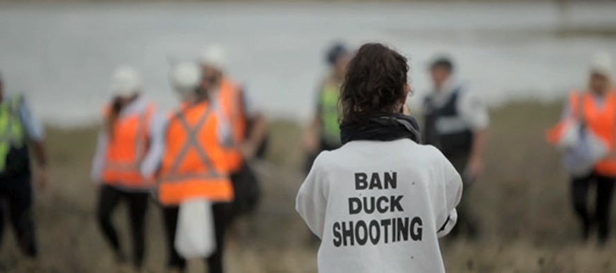 VIDEO: Duck hunting protester gets accidentally shot in the face by duck hunter