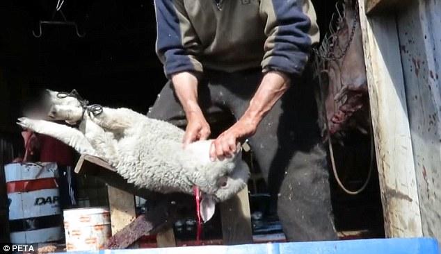 Lambs7