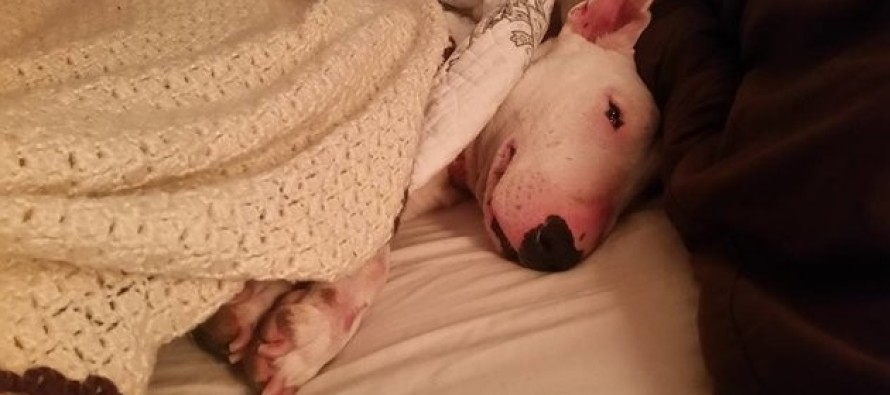 She lived in a cage for 7 years… then saw a bed for the first time… and LOL