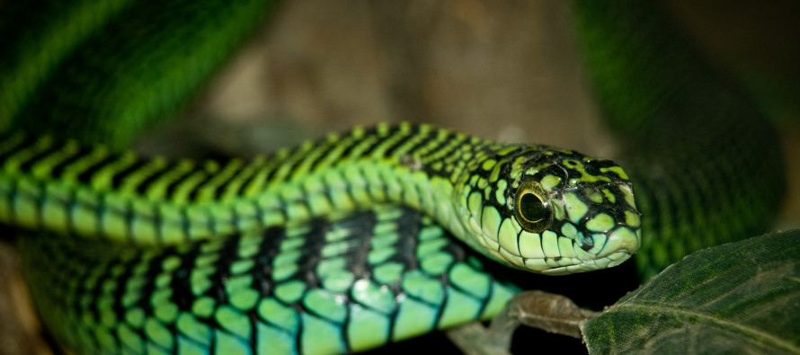 Man records last day of life after being bit by a snake