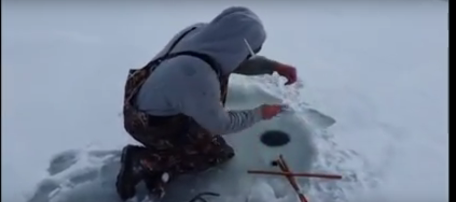 VIDEO: While Ice Fishing, Man Reels In Something You'd NEVER Expect!