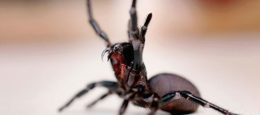 """Australian Police: Man Screaming """"I'm Going to Kill You!"""" Was Screaming at Spider"""